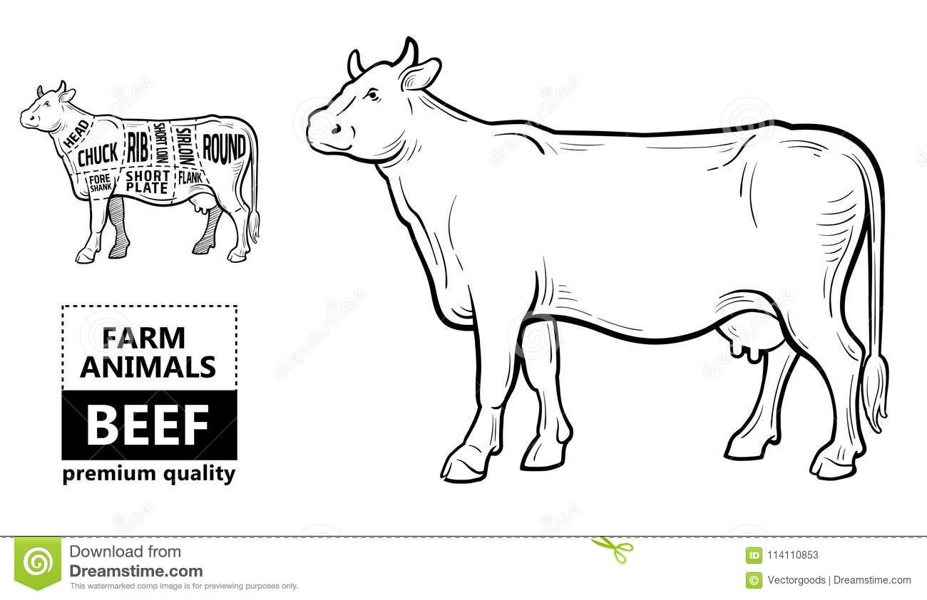 cut beef set poster butcher diagram cow vintage typographic hand drawn vector illustration 114110853 cows nose diagram wiring diagram blog
