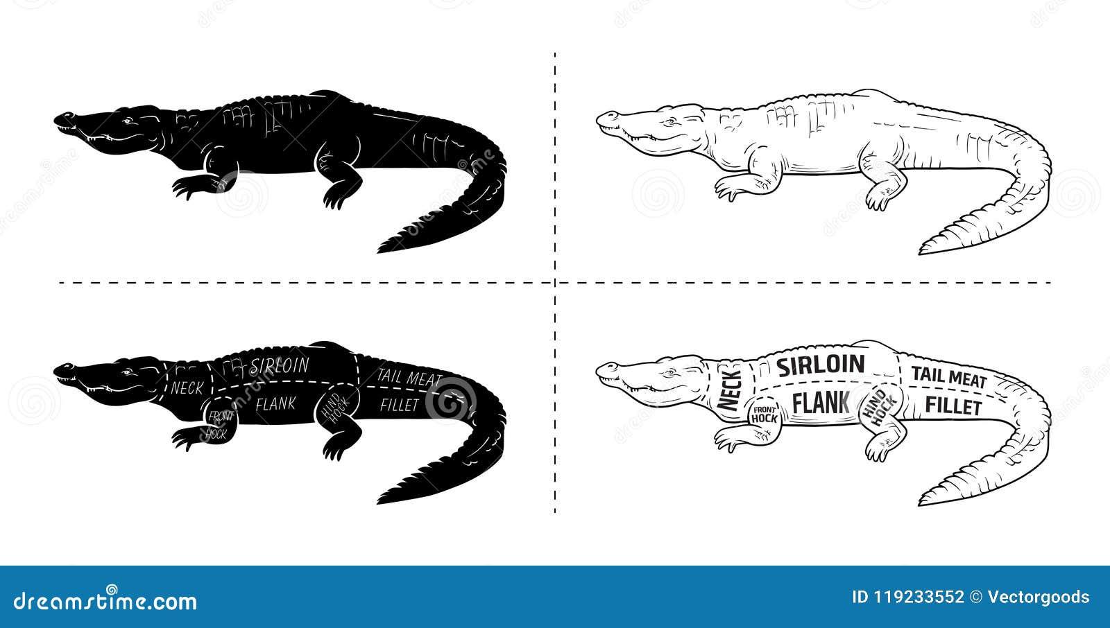cut of crocodile set  poster butcher diagram - desert-ship  vintage  typographic hand