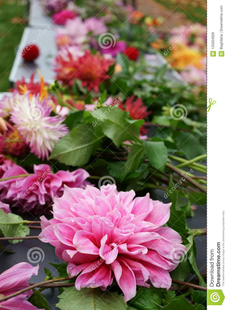 Cut Dahlia Flowers On A Table For Sale Stock Photo Image Of