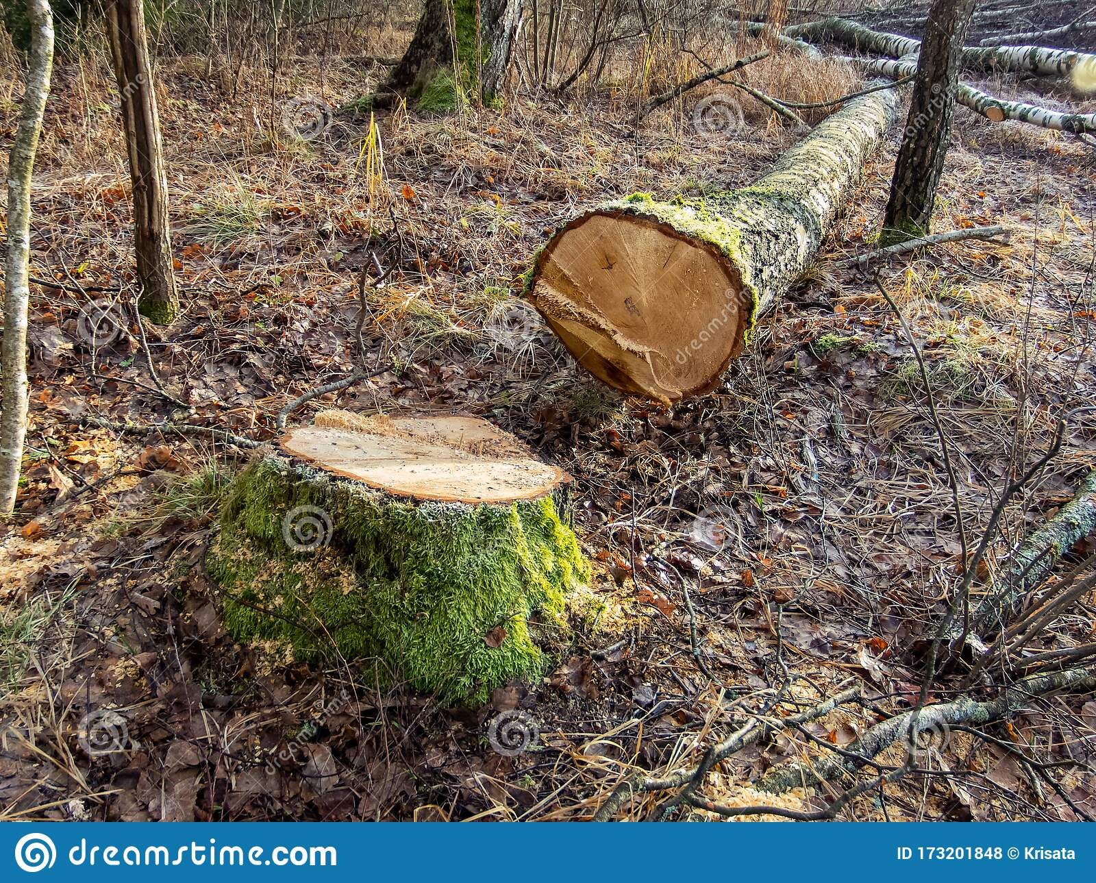 how to cut down trees in leaf green