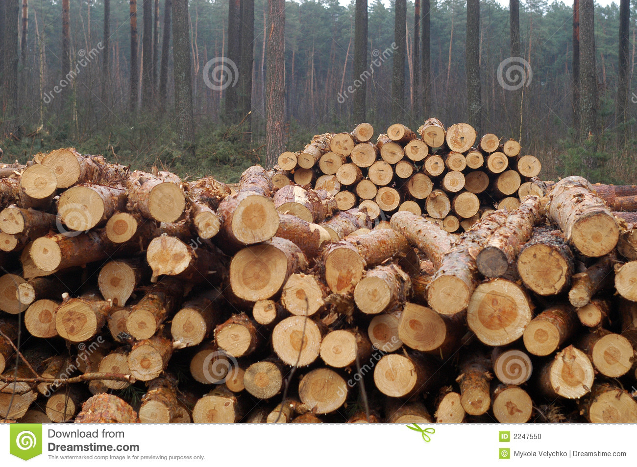 cutting of trees affecting on animal birds Trees and animals  trees support the lives of many large organisms some large animals can only use large trees for shelter as forests are cut repeatedly.