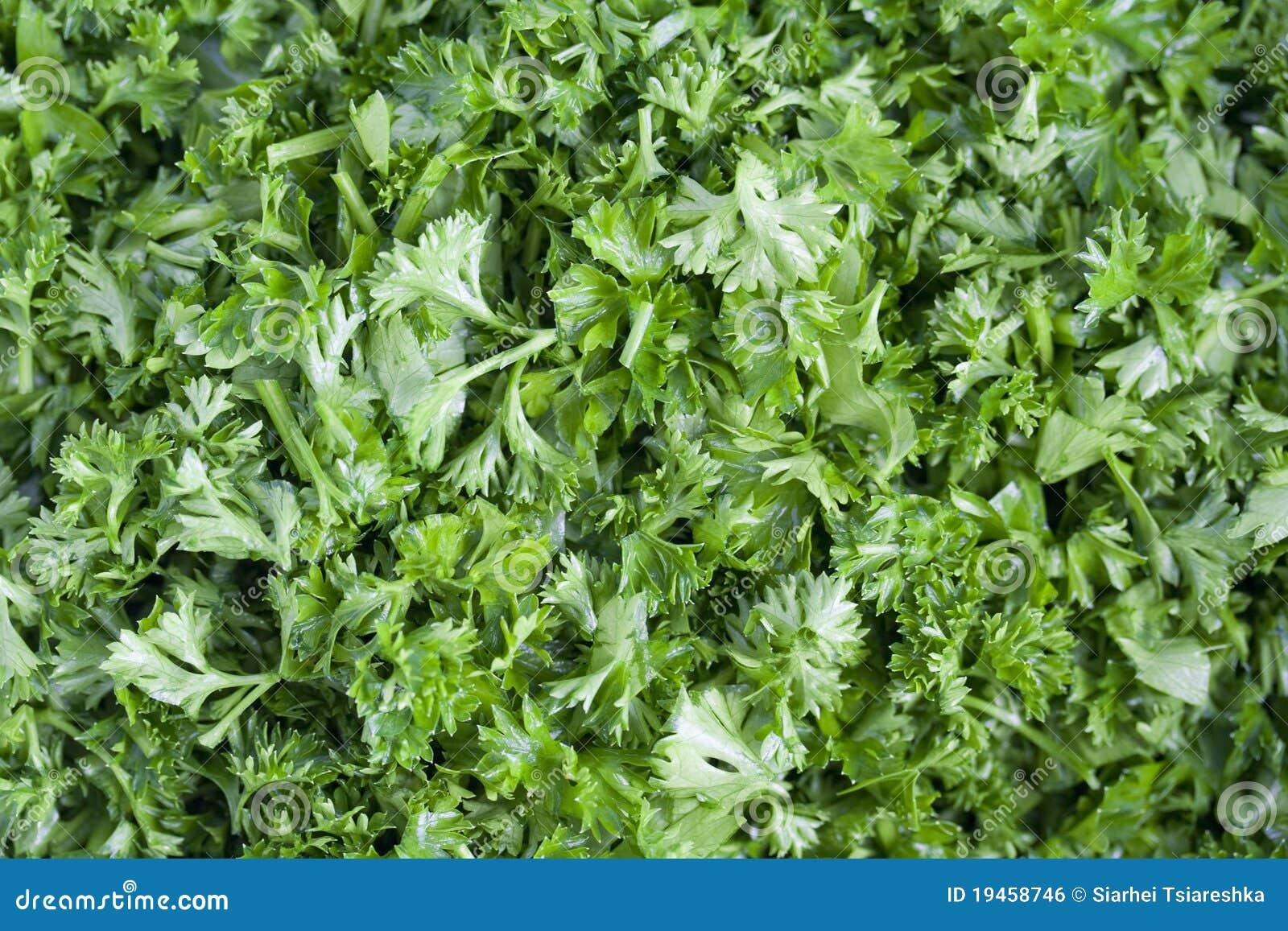 how to keep cut parsley fresh