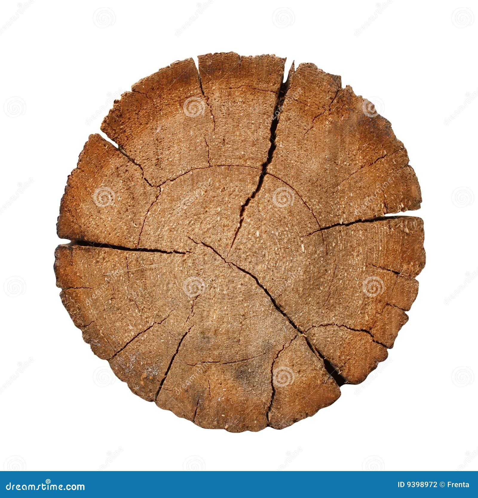 Cutting A Log : Cut of a log stock photo image environmental growth