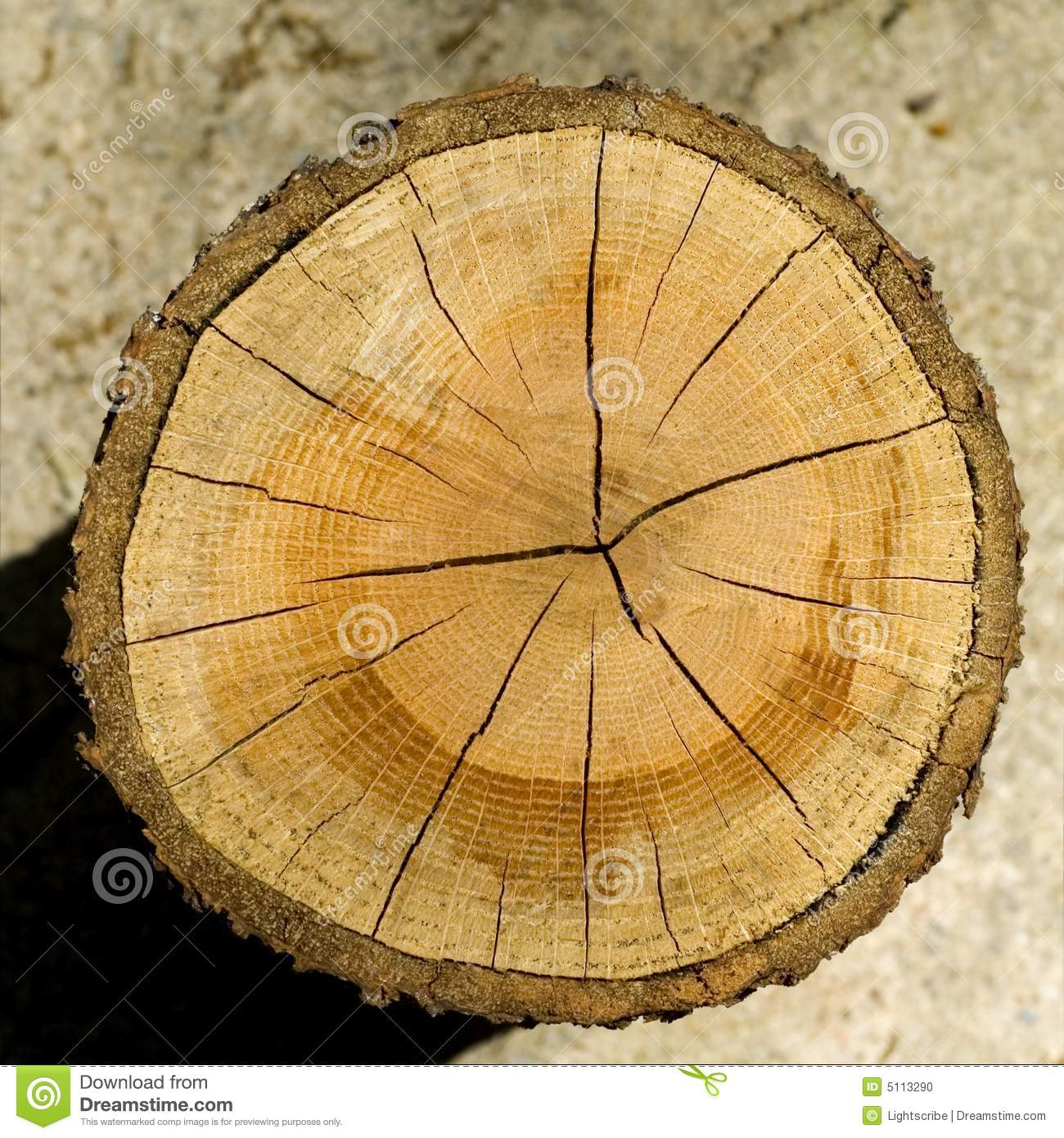 Cut log wood grain stock photo image of orange nature for How to slice wood