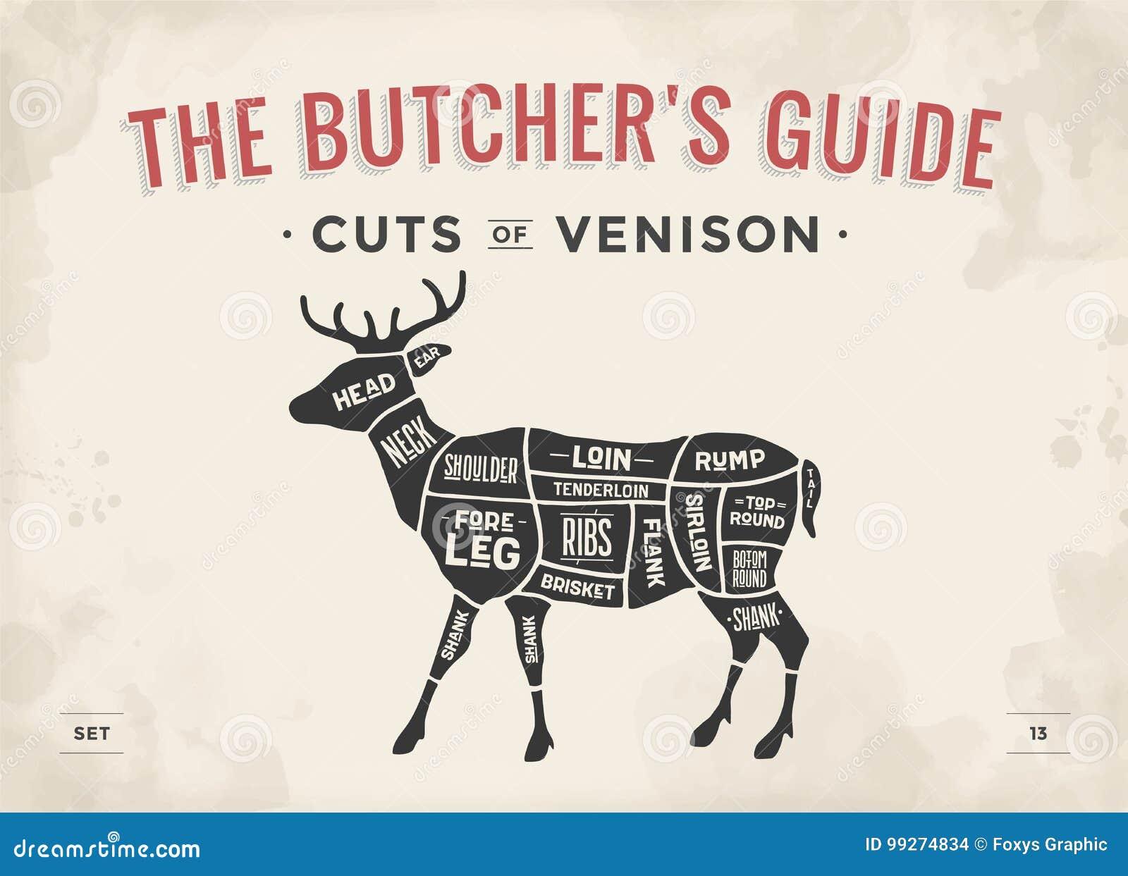 cut of meat set poster butcher diagram scheme venison stock rh dreamstime com Whitetail Deer Butchering Diagram Diagram of Processing Deer Meat