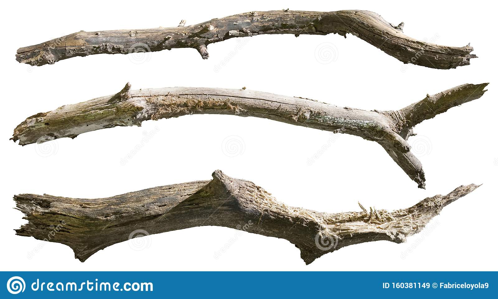 Cut Out Dead Tree Branches Stock Image Image Of Clipping Wood 160381149