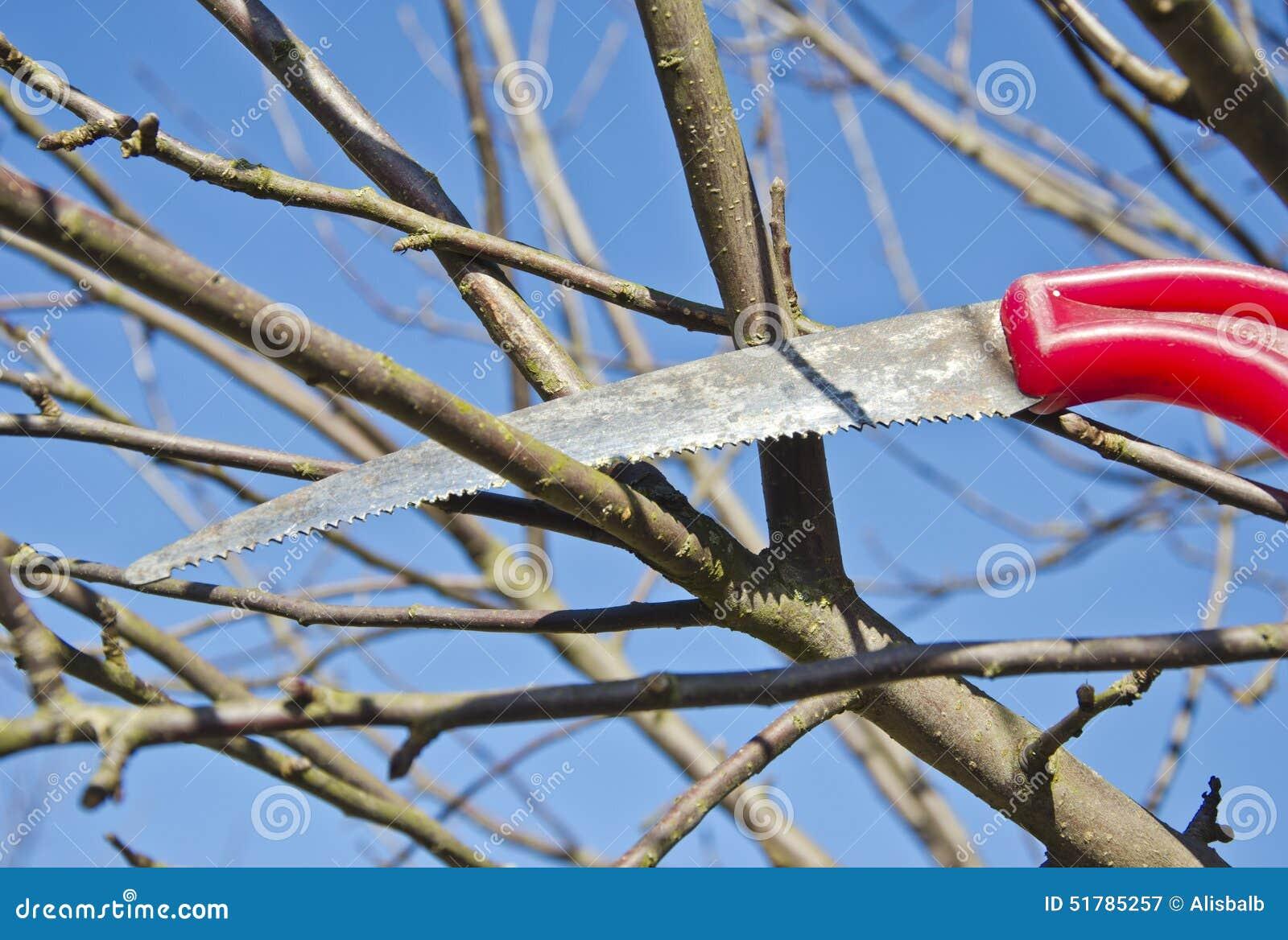 Apple Branch Cut Garden Handsaw ...