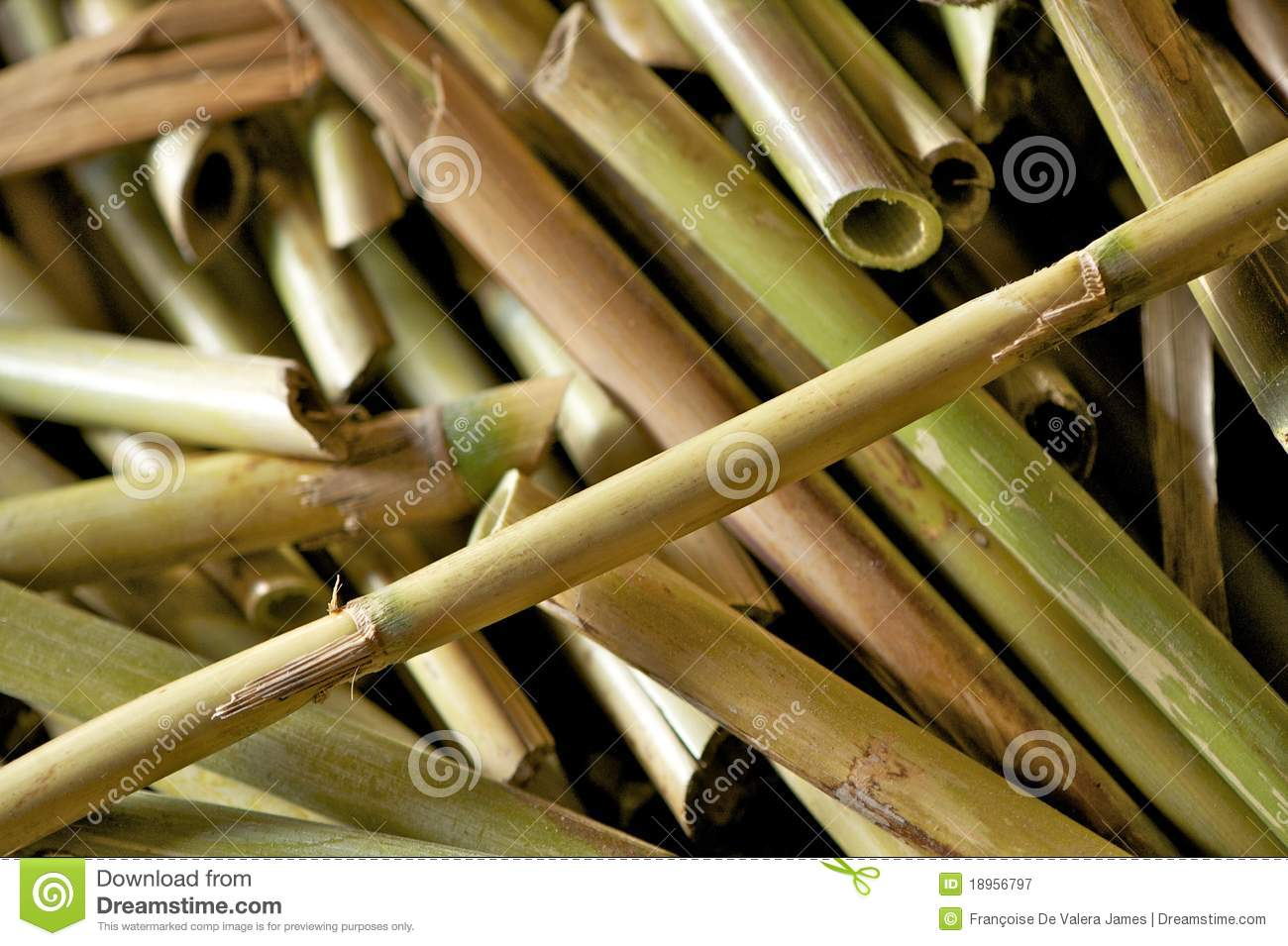 Cut river cane or bamboo stock image image of river for Uses for bamboo canes