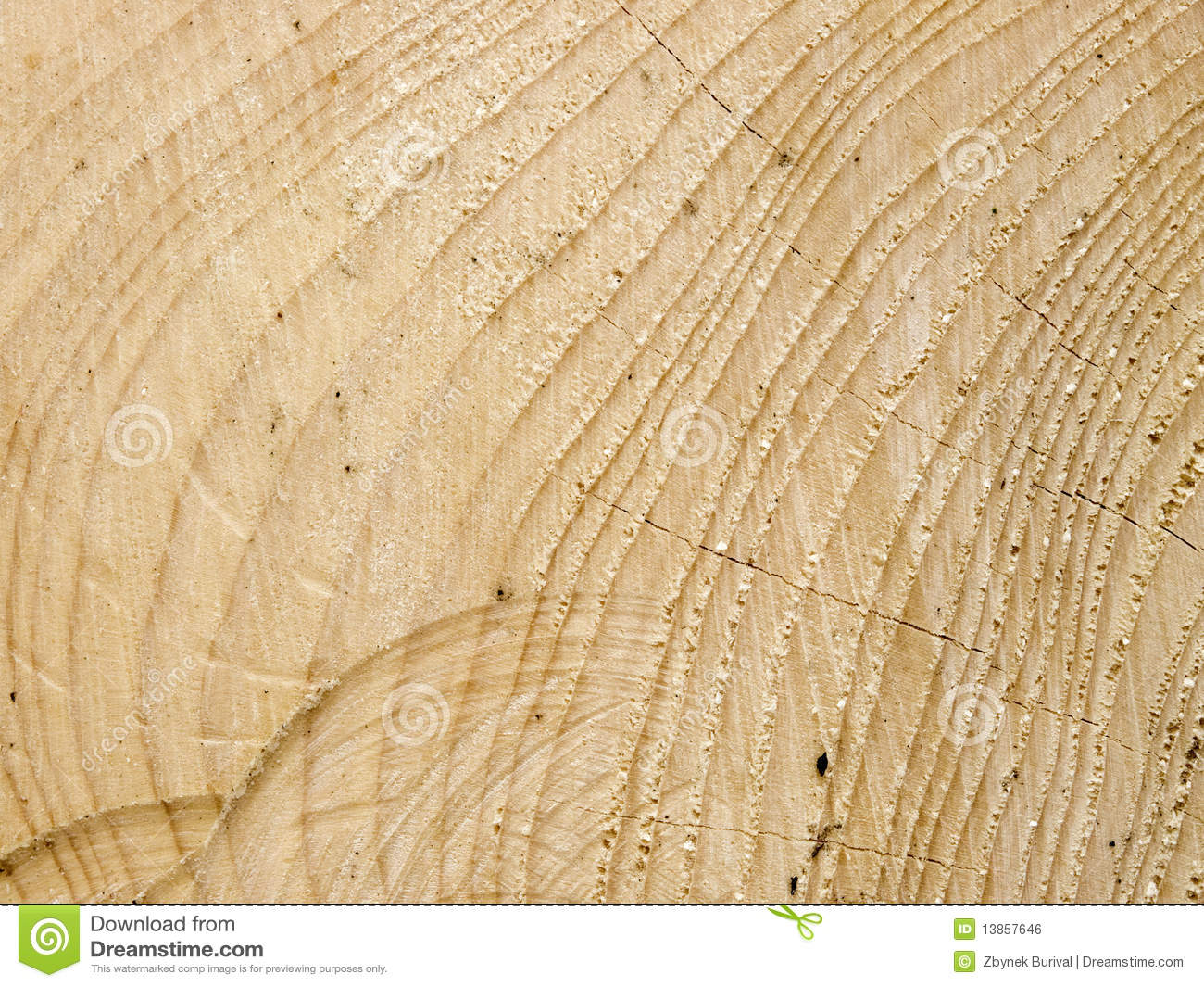 Cut Spruce Wood Texture Stock Photo Image Of Material
