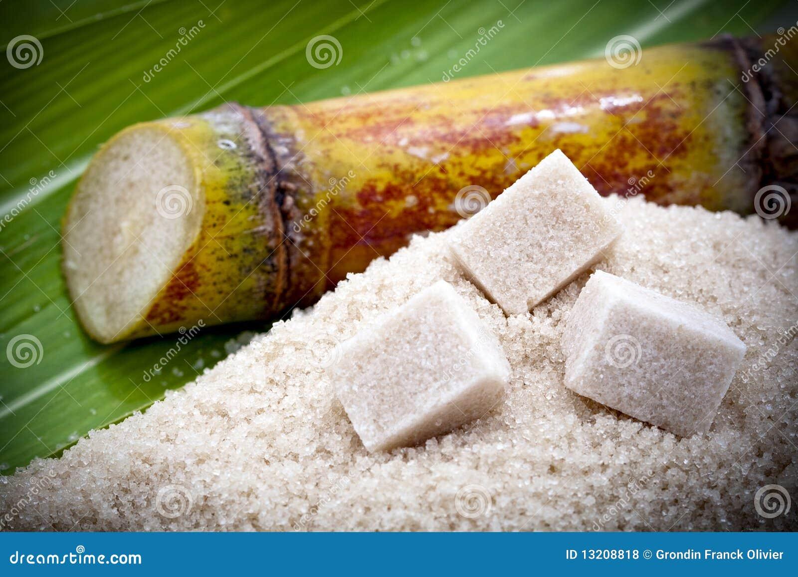 Cut Sugarcane Plant Royalty Free Stock Photos