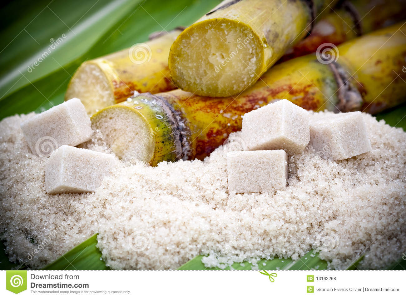 Cut Sugarcane plants