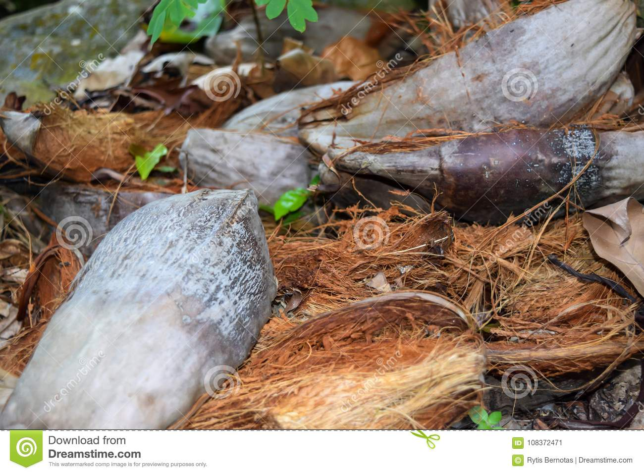 Cut up Coconut Shell on the Ground