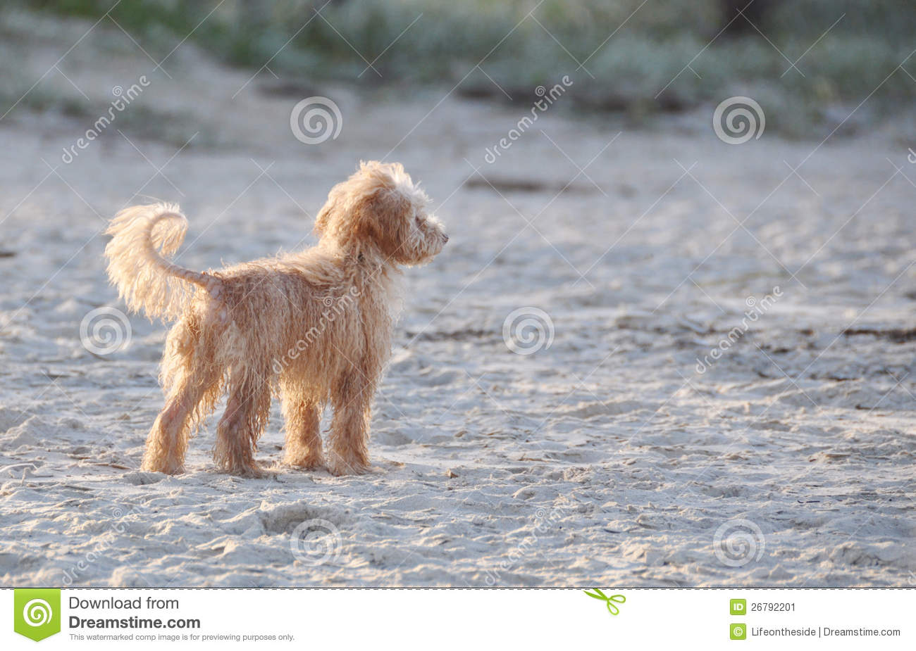 cute-adorable-little-scruffy-dog-alone-beach-26792201 Map Animation on make a animated map, treasure map, geomatics engineering, trap street, interactive map, map projection, research map, animated population growth map, sci-fi map, media map, animated world map, world culture map, literature map, data visualization map, adventure map, website content map, early world maps, tv map, cartographic generalization, illustrator map, cartographic relief depiction, creative process map, fiction map, disney's map, virtual map, here be dragons,