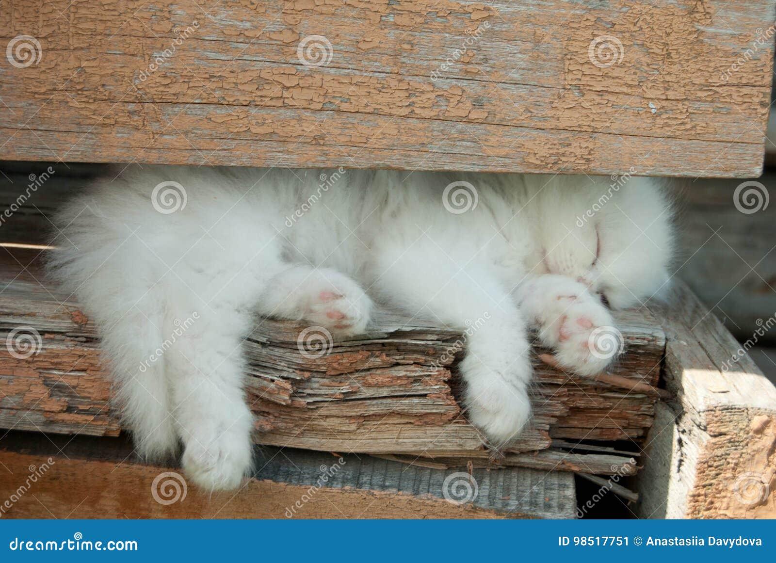 Cute angora white kitten sound sleep
