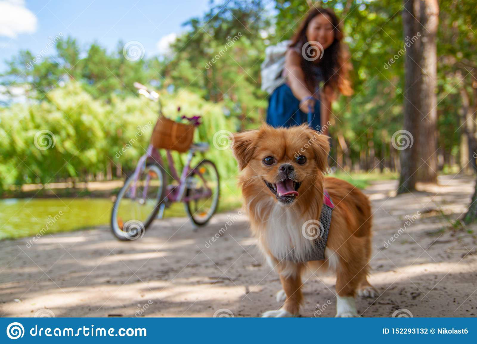 Cute asian girl with little dog walking in park. Woman sitting on green grass with dog - outdoor in nature portrait. Pet, domestic
