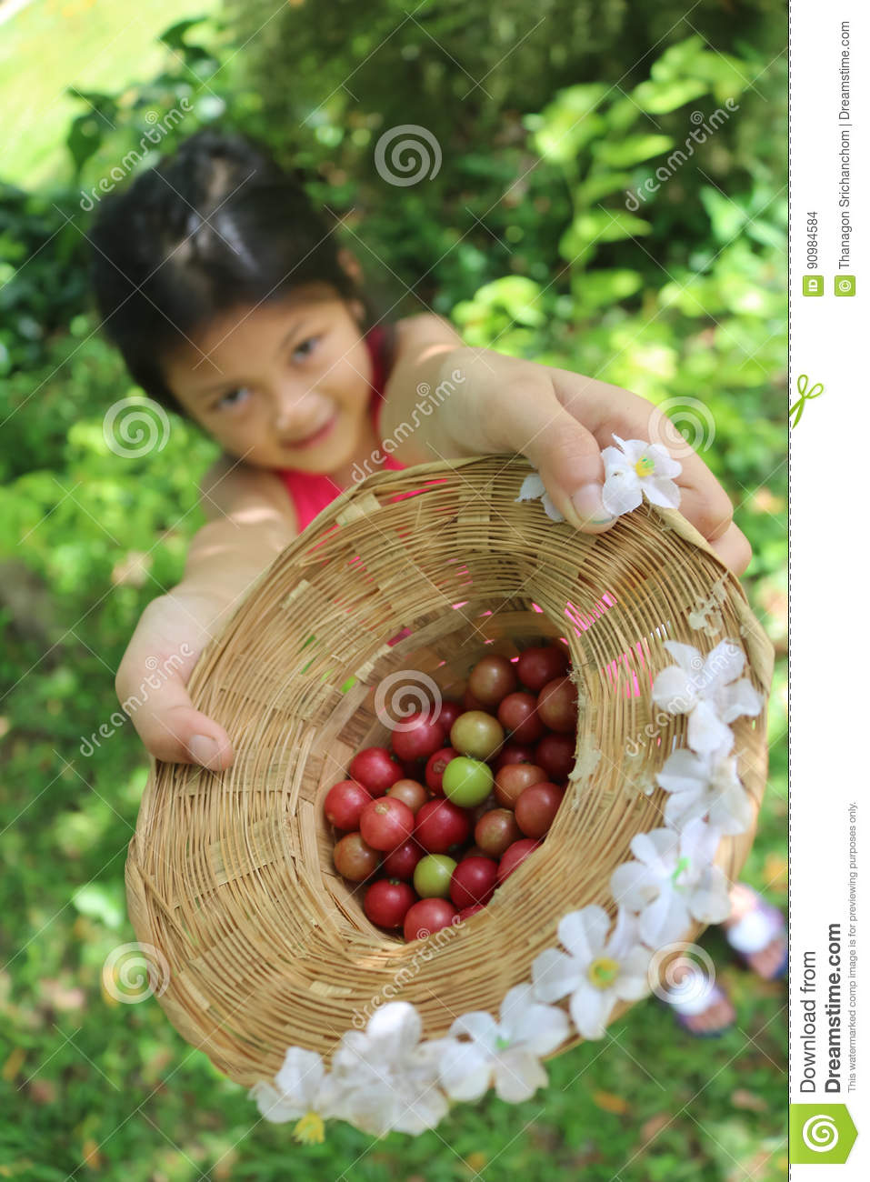 Cute Asian Girls Are Harvested The Fruit In The Garden. Stock Photo ...