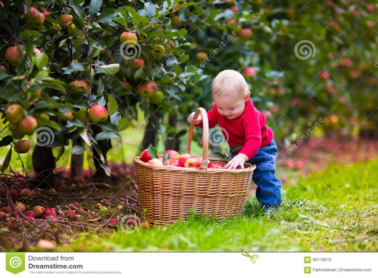 Cute Baby Boy Picking Fresh Apples From Tree Stock Photo