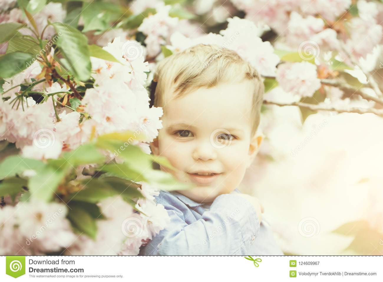Cute Baby Boy Among Pink Blossoming Flowers Stock Image Image Of