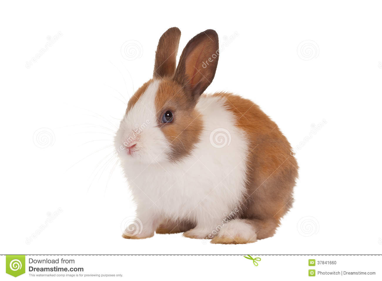 cute baby bunny stock photo image 37841660 french fries clipart french fries clipart png