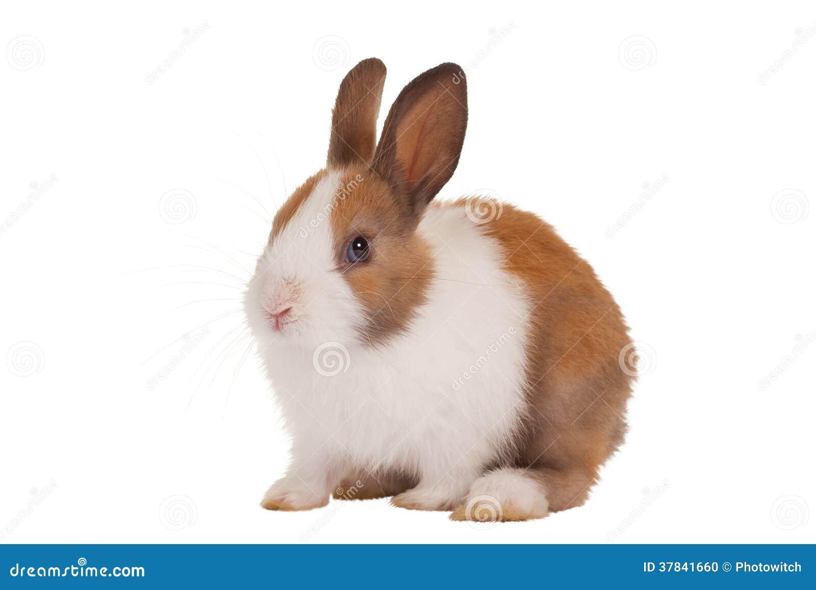 Cute Baby Bunny Stock Photo Image 37841660