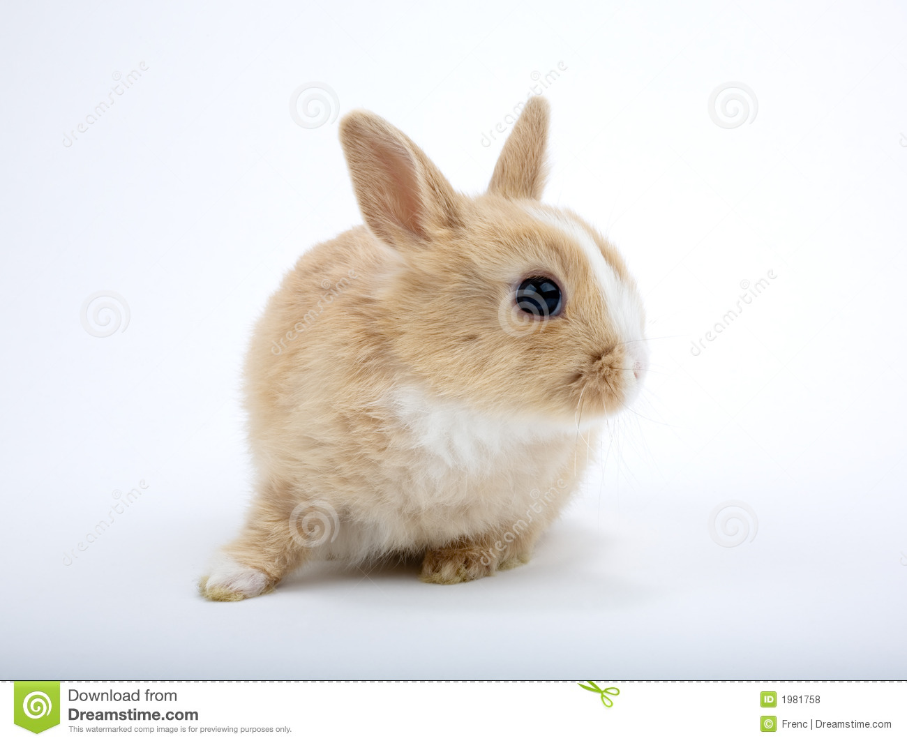 Cute Baby Bunny Lies And Look Right Royalty Free Stock Photos - Image ...