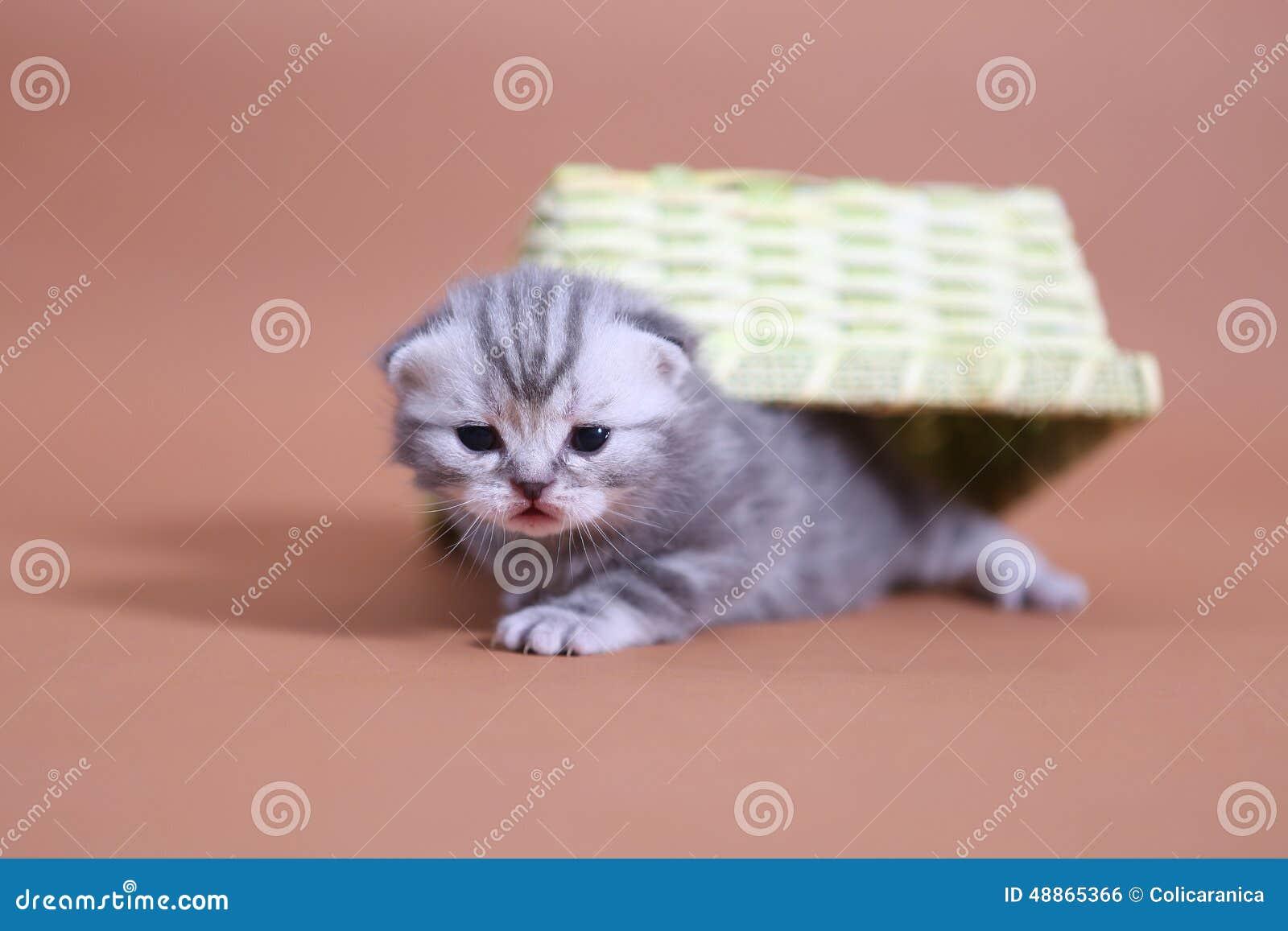 cats bus schedule 14