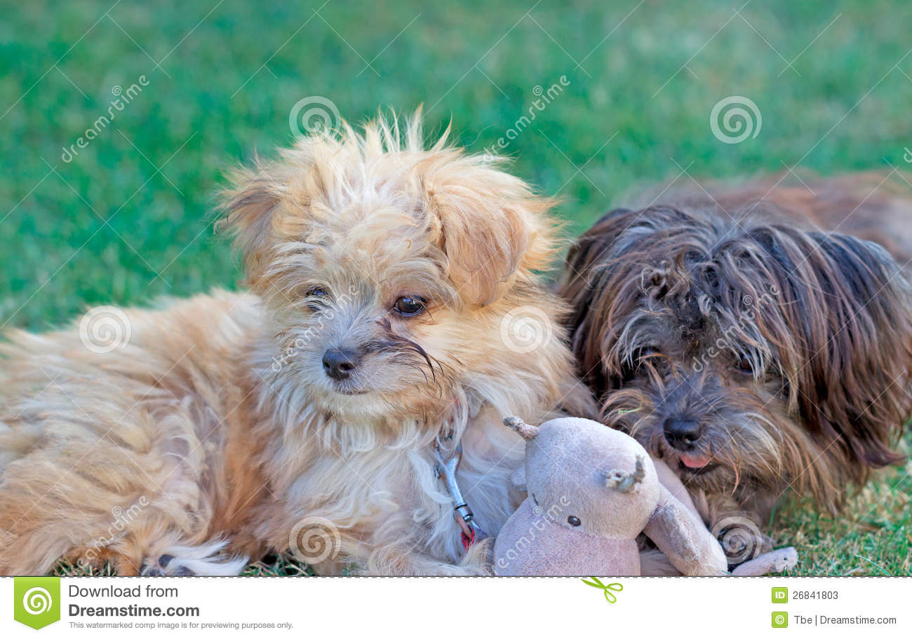 Cute baby dogs stock image Image of face loveliness