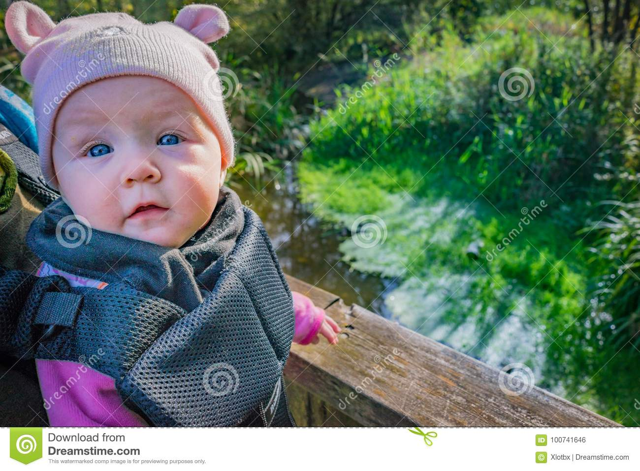 Cute Baby With Ear Hat In Baby Carrier At Wetland On Nature Hike ... 43eb785a998