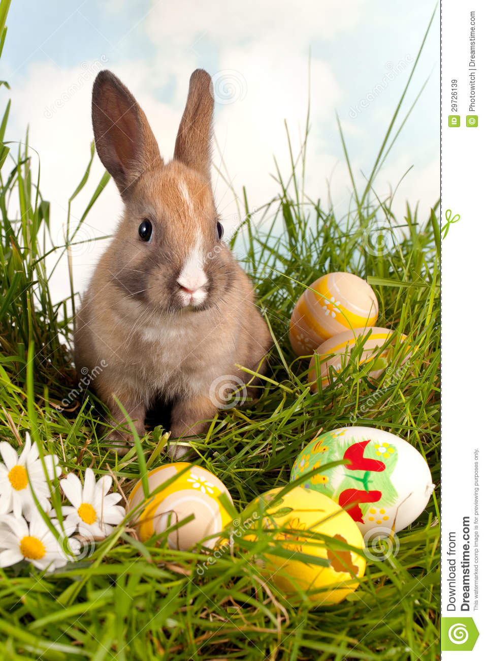 Easter bunny with eggs stock image. Image of wildlife - 29726139 for Real Easter Bunny With Eggs  59jwn