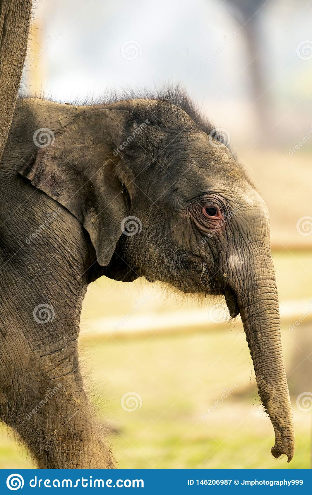 Cute Baby Elephant in chitwan National park