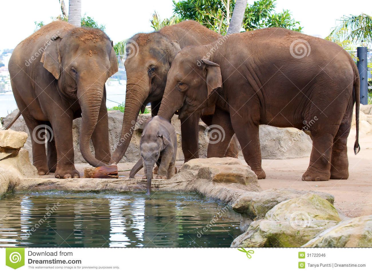 Cute Baby Elephant Drinking Water Stock Photo - Image ...