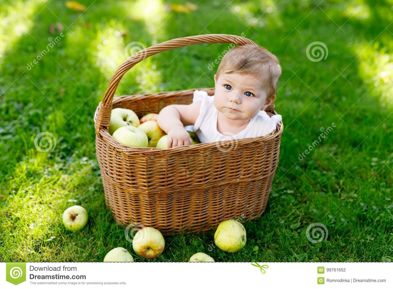 33c430df9 Cute Baby Girl Sitting In Basket Full With Ripe Apples On A Farm In ...