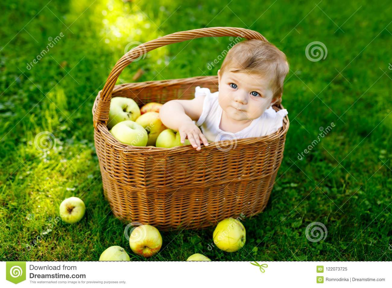 Cute baby girl sitting in basket full with ripe apples on a farm in early autumn. Little baby girl playing in apple tree