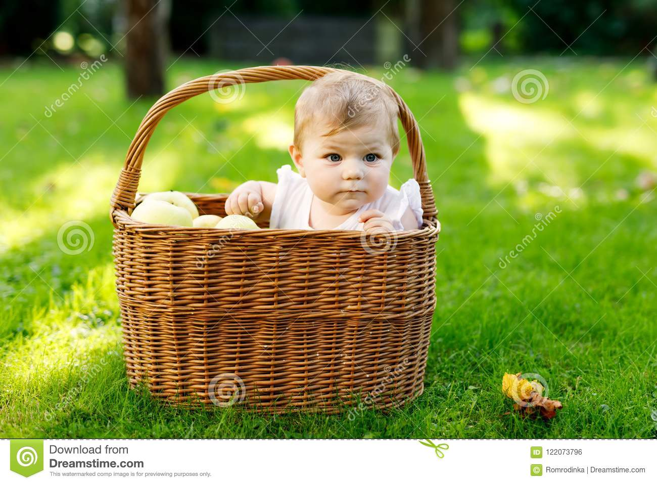 cute baby girl sitting in basket full with ripe apples on a farm in
