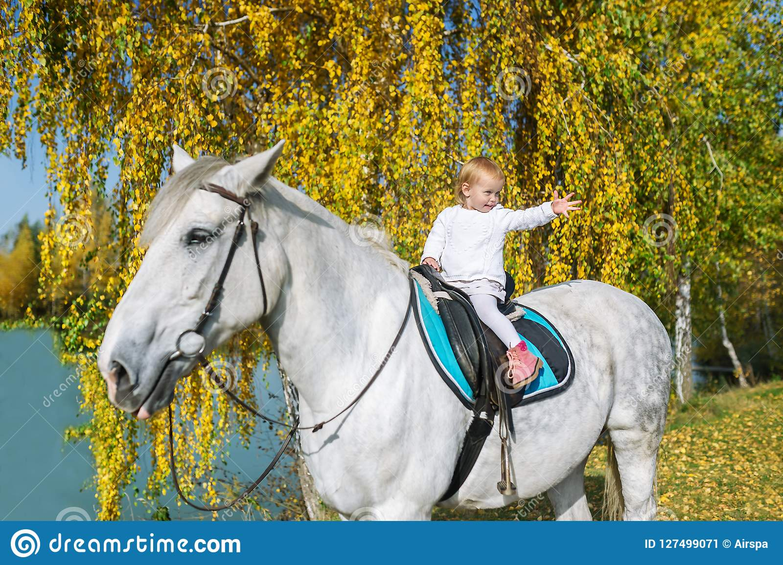 A Cute Baby Girl Is Sitting On A Beautiful White Horse In Autumn Nature Stock Image Image Of Animal Farm 127499071