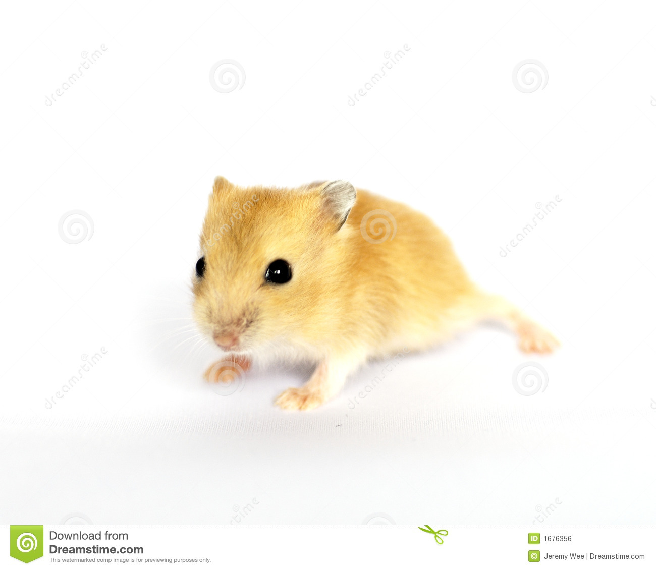 cute baby hamster stock photo image of miniature mice 1676356. Black Bedroom Furniture Sets. Home Design Ideas