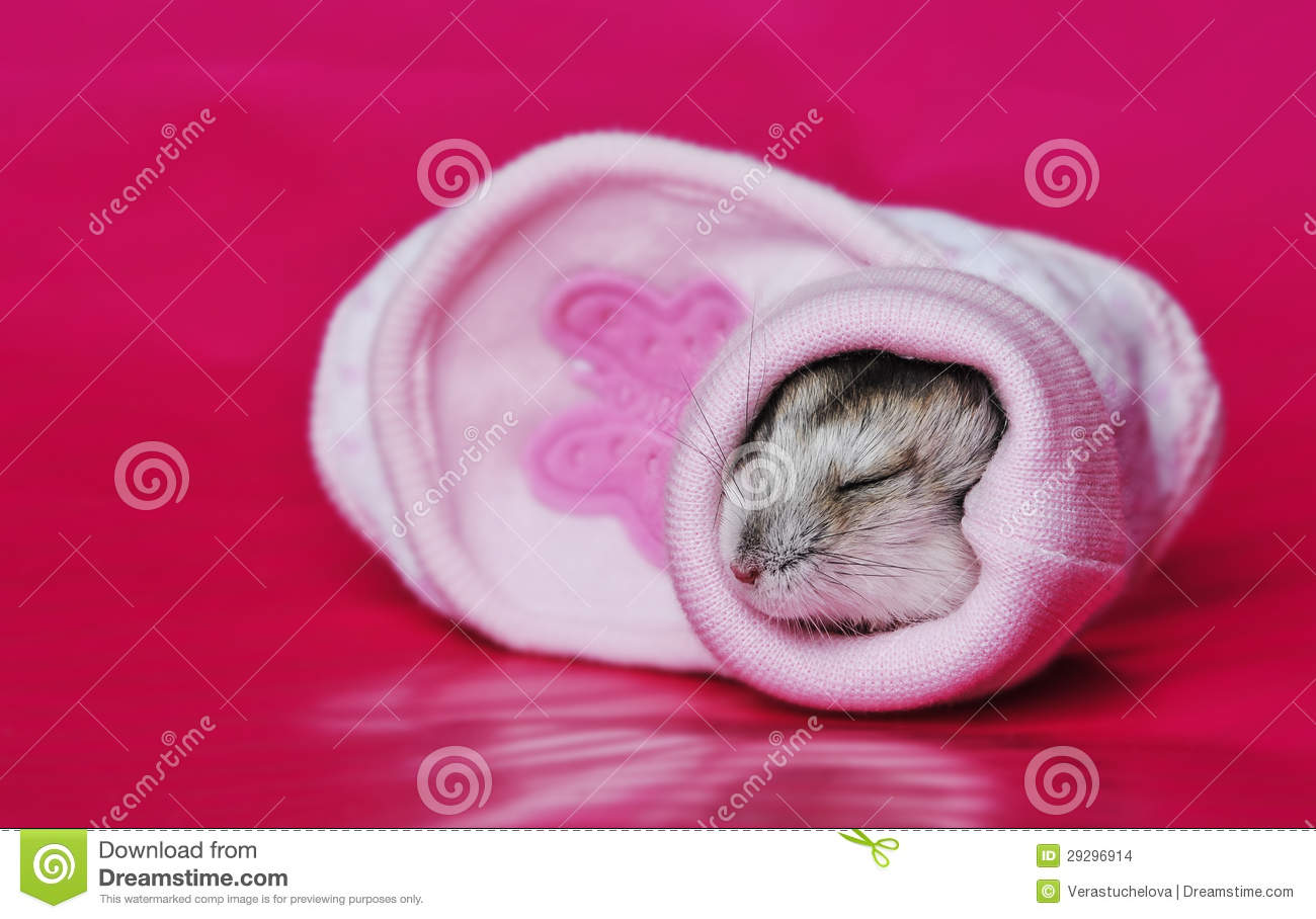 Cute baby hamster stock photo  Image of friend, adorable