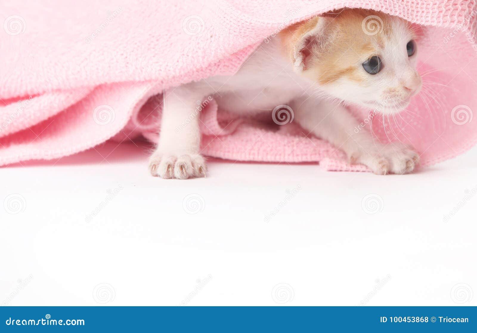 Cute Baby Kitten Stock Photo Image Of Beautiful Fluffy 100453868