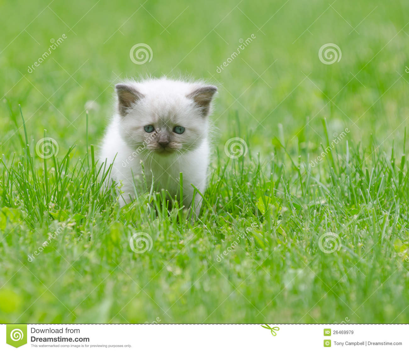 Cute Baby Kitten In The Grass Royalty Free Stock Images - Image ...