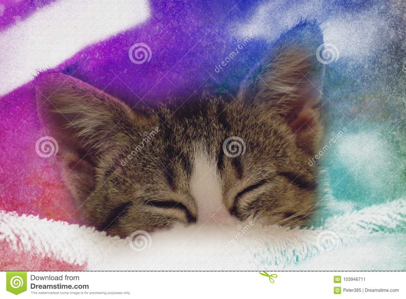 Download Cute baby kitten sleeping stock image. Image of pillow - 103946711