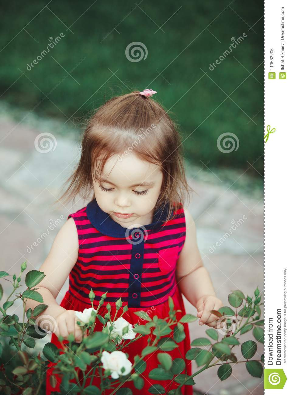 ed4156461 Cute baby looks at the white spray roses. adorable little girl in red dress.