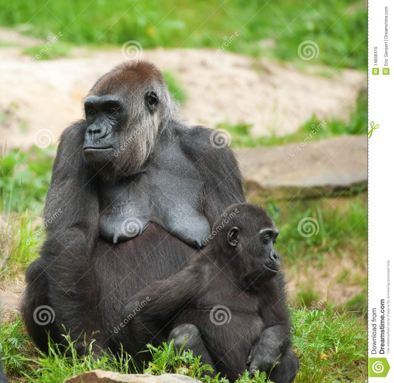 Cute baby gorilla - photo#24
