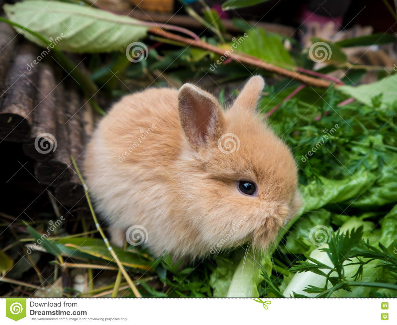 cute baby rabbit stock image image of fluffy young 80981119