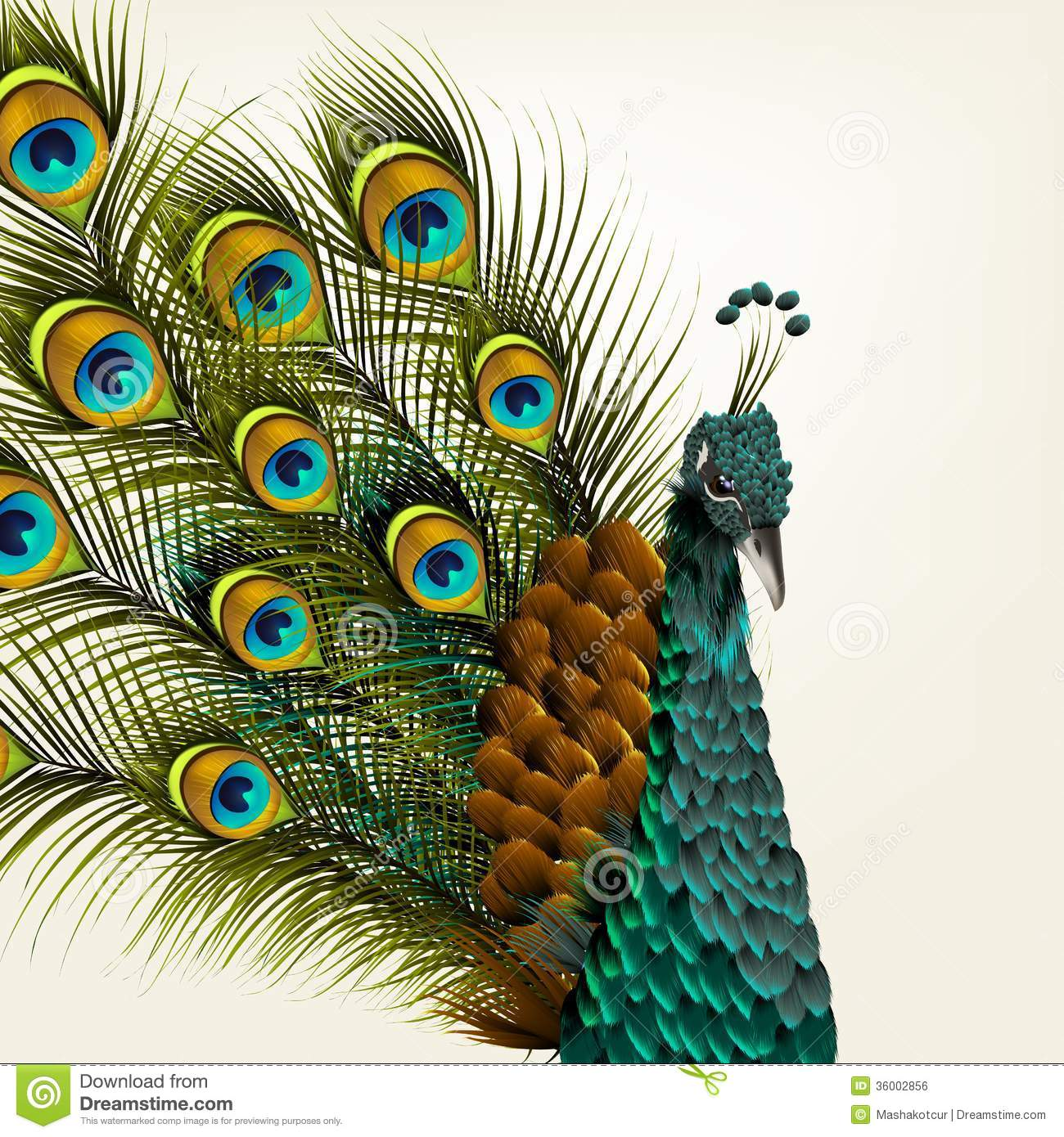 Cute Background With Vector Detailed Peacock On White For