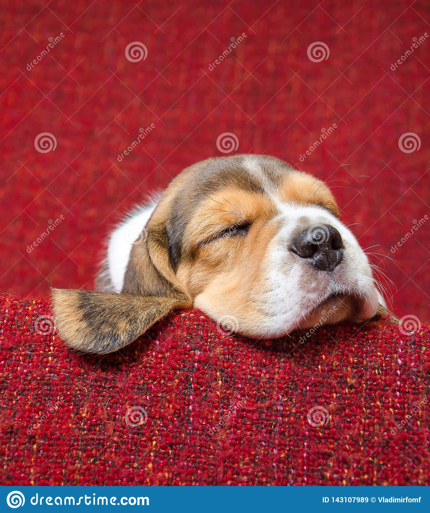 Cute beagle puppet sleeping on red blanket