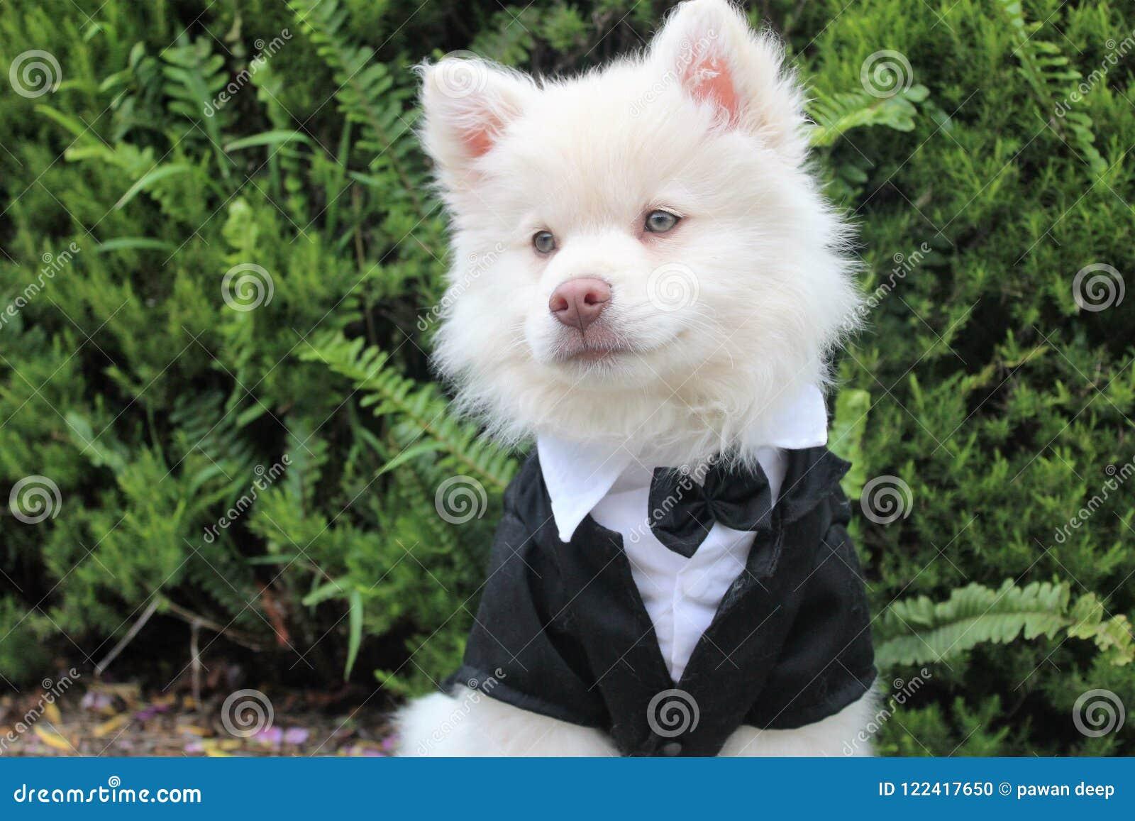 Cute Beautiful White Dog Stock Photo Image Of Cute 122417650