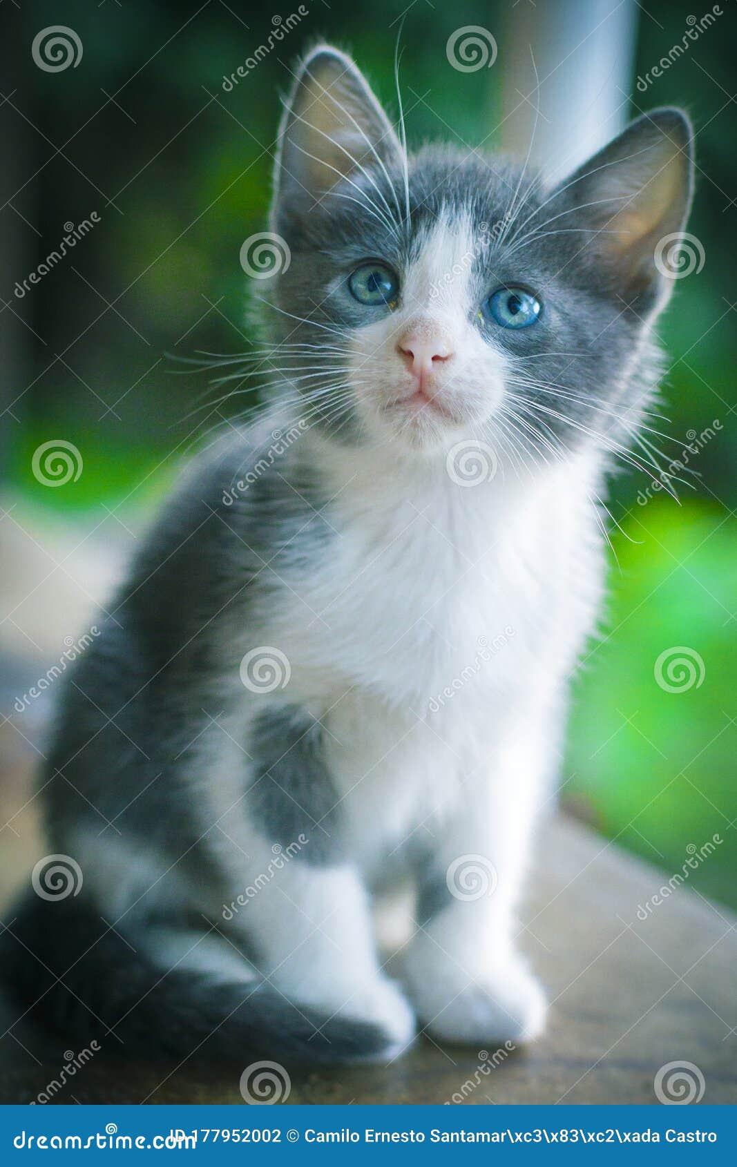 Baby Cat Beautiful Pet Enjoying The Outdoors Stock Photo Image Of Spots Cute 177952002