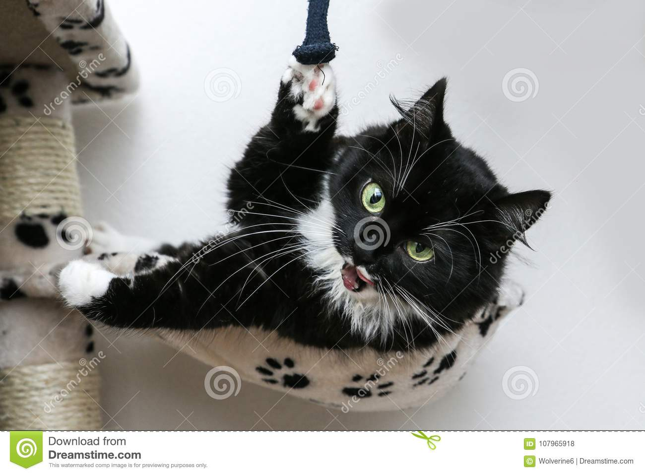 Cute Black Cat Lying On The Play House Stock Photo Image Of
