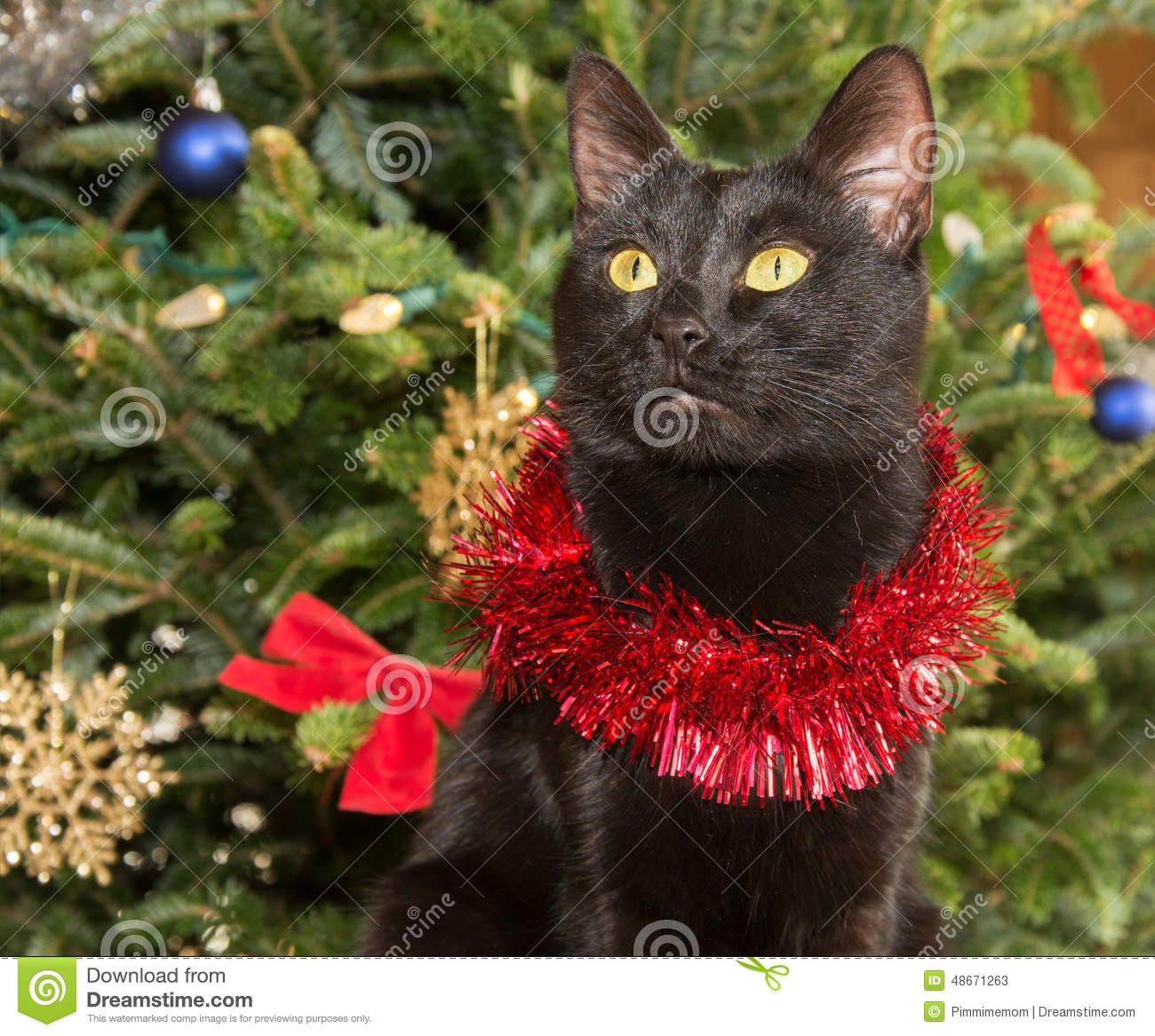 Christmas Tree Made Of Black Cats: Cute Black Cat Wearing Tinsel Against Green Christmas Tree