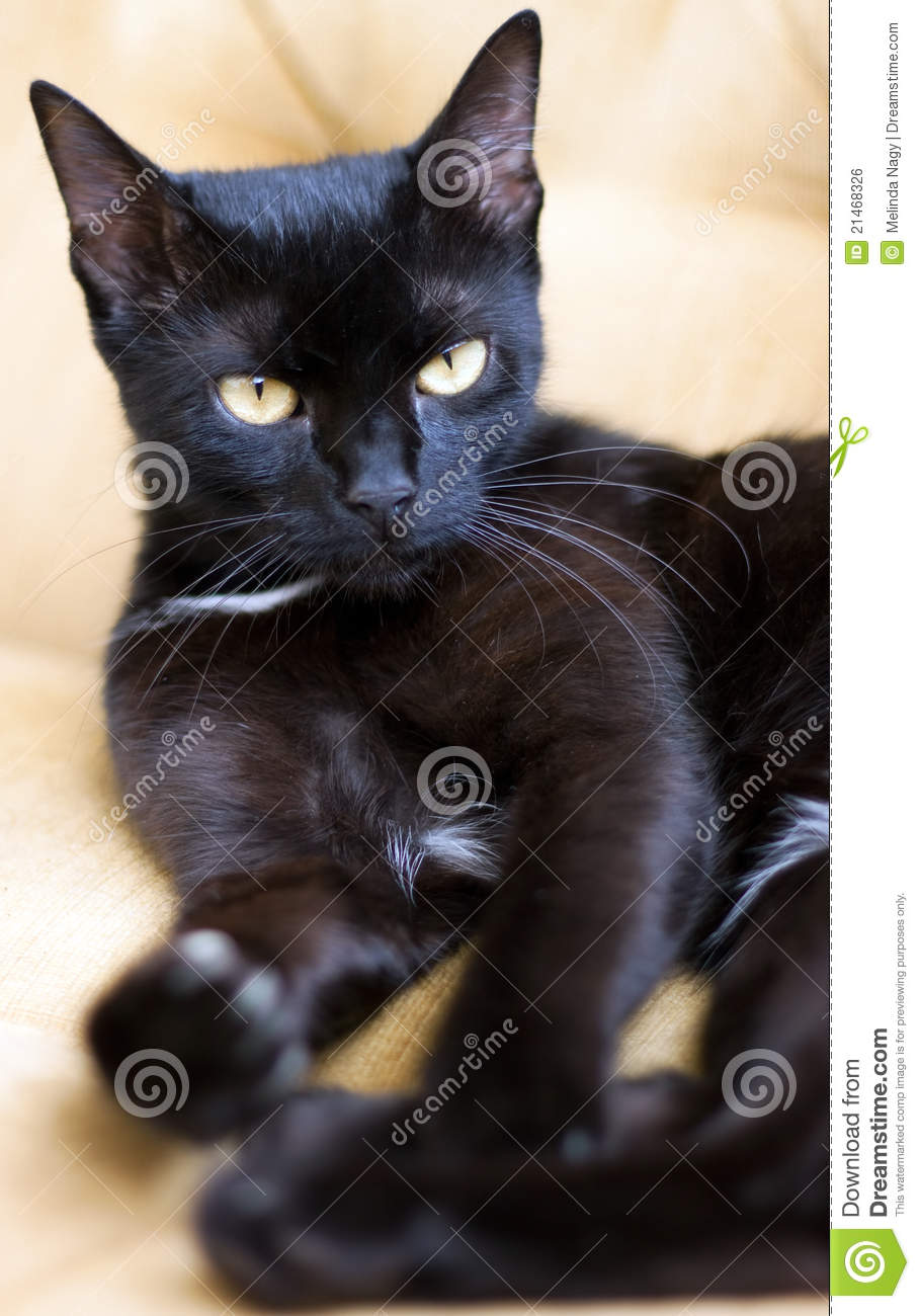 What Is The  Themes In The Black Cat